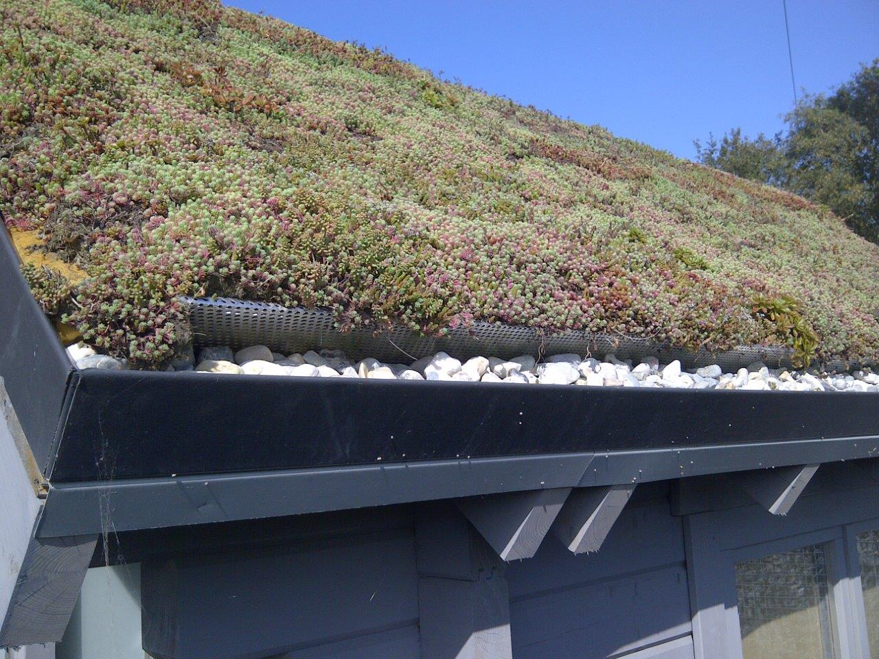 Xcellent plug - Green Roof